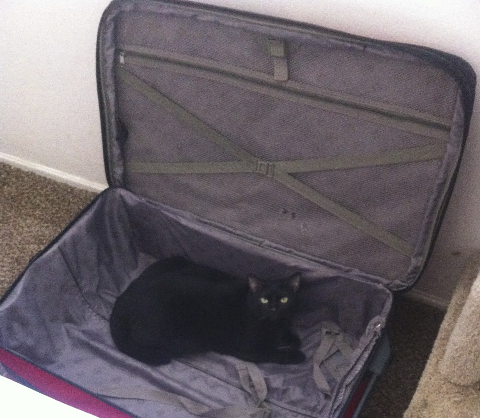 gwennie-in-suitcase
